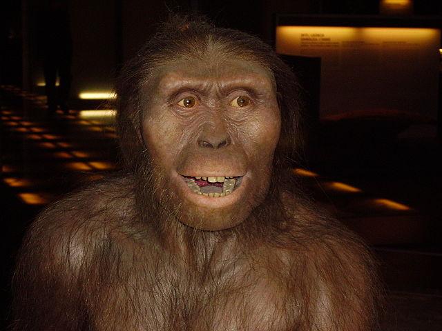 Nachbildung eines Affen der Gattung Australopithecus Afarensis
